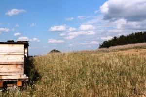Bienen am Biohof Harrer